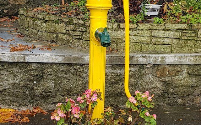 Leitrim Village's Cow tail roadside pump