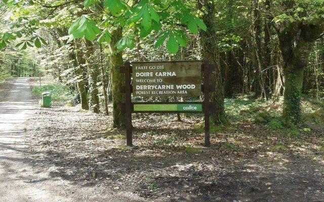 Derrycarne Wood